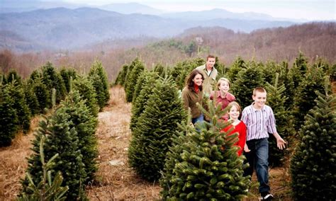 choose cut and stay in the christmas tree capital