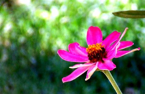 imagenes k lindas imajenes de flores lindas imagui