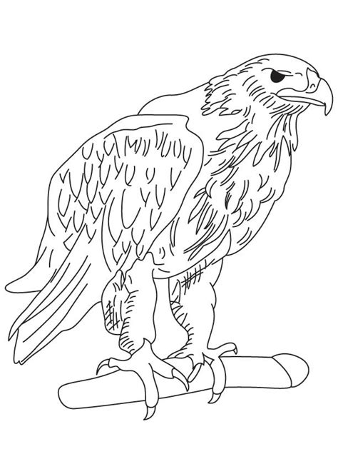 Golden Eagle Coloring Page golden eagle coloring page free golden eagle coloring page for best coloring pages