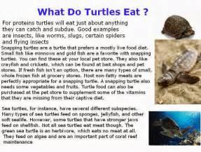 what do turtles eat abdlaziz498