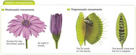 nastic and tropic movement in plants 5 relacion en plantas bilingual science i e s