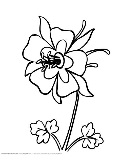 coloring pages of mexican flowers new mexico tree coloring page coloring home