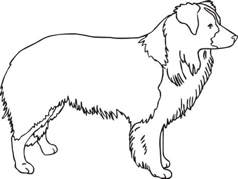 coloring page border collie border collie outline cliparts co