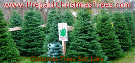christmas trees salt lake free images at clker com