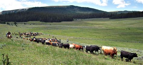 working cattle ranches in south africa cattle ranches working ranch vacations autos post