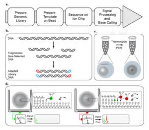 Ion Proton Sequencing Figure 3 Ion Torrent Sequencing Workflow