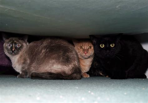 cat hiding under bed 5 ways to help your cat deal with the fear of thunderstorms