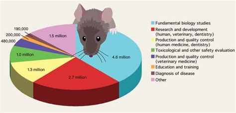 animal testing statistics cruelty free cosmetics find the facts think about animals