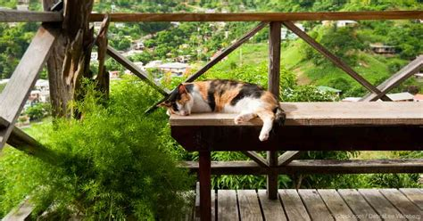 cat patio why your cat needs a cat patio or catio