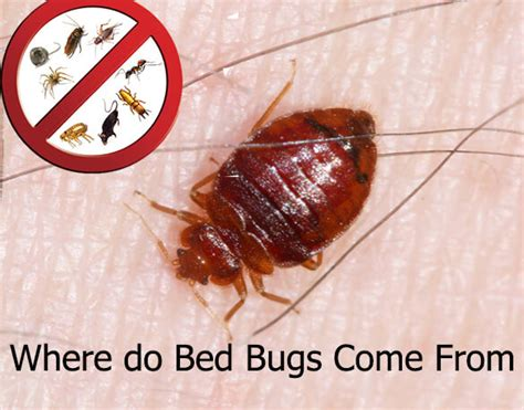 where can bed bugs live where do bed bugs come from forgetpests