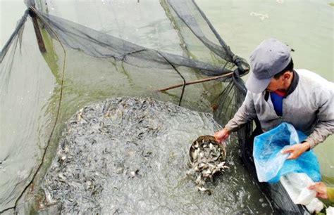 Bibit Ikan Nila Di Bandung cuaca buruk produksi ikan di waduk turun jabar ekspres