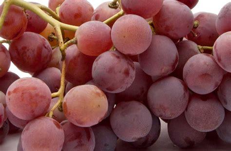 globe uva da tavola uva globe p m gregorelli