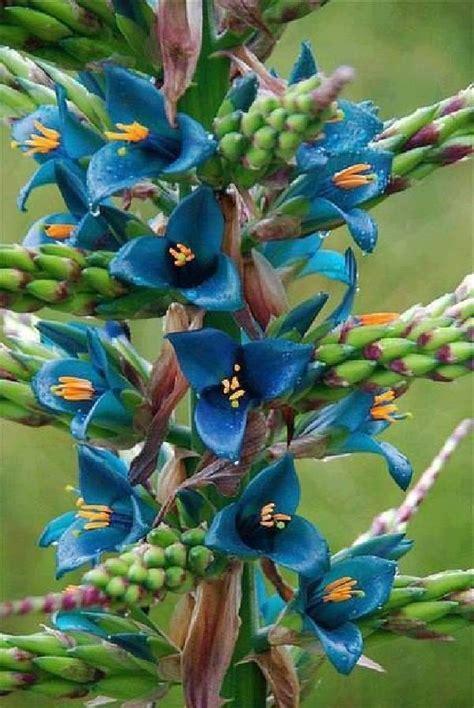 shangralafamilyfun shangrala s undersea restaurant shangralafamilyfun shangrala s beautiful flowers