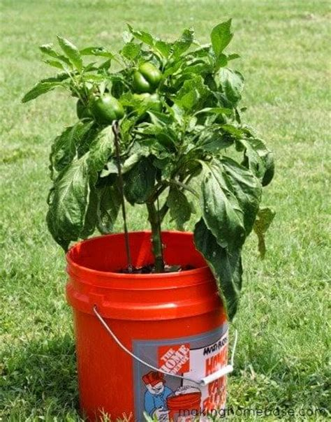 5 gallon container gardening nature gardening archives page 2 of 5 mother2motherblog