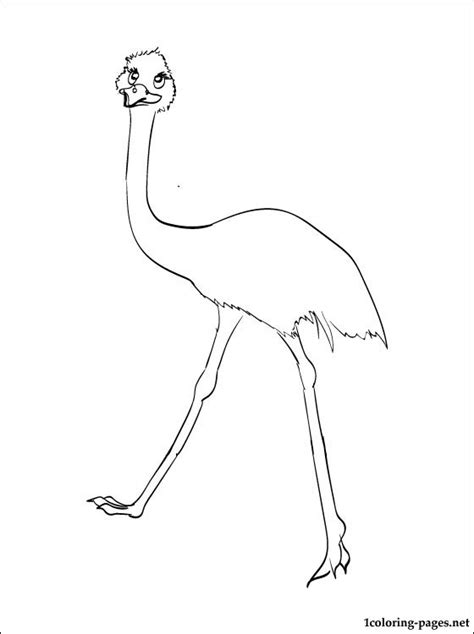 emu coloring page free free coloring pages of an emu