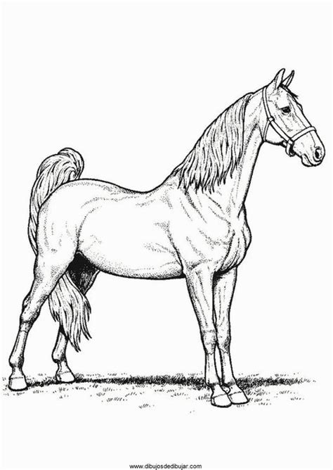 morgan horse coloring page morgan horse coloring pages