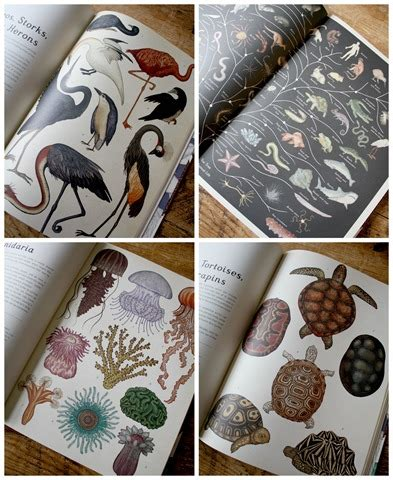 animalium colouring book welcome 1783706120 4 beautiful books to gift frame emily a clark