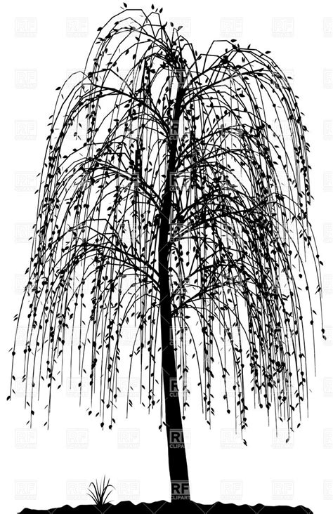 high detailed willow tree silhouette vector image 32666