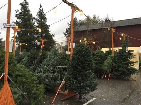 christmas tree lot holy rosary school