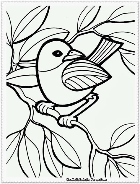 coloring pages birds realistic free realistic birds coloring pages