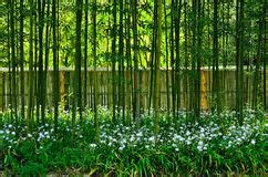 bamboo garden cottage grove beautiful flower garden with bamboo path stock photo