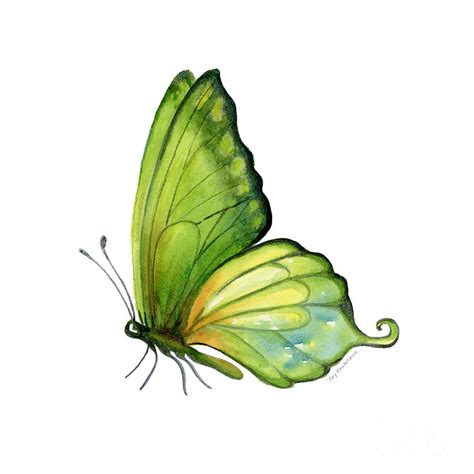 Butterfly Home Decor by 5 Sap Green Butterfly Painting By Amy Kirkpatrick