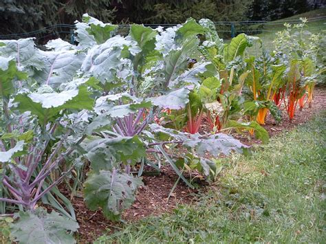 plant a fall garden and grow veggies far beyond summer - What To Plant In The Fall Garden