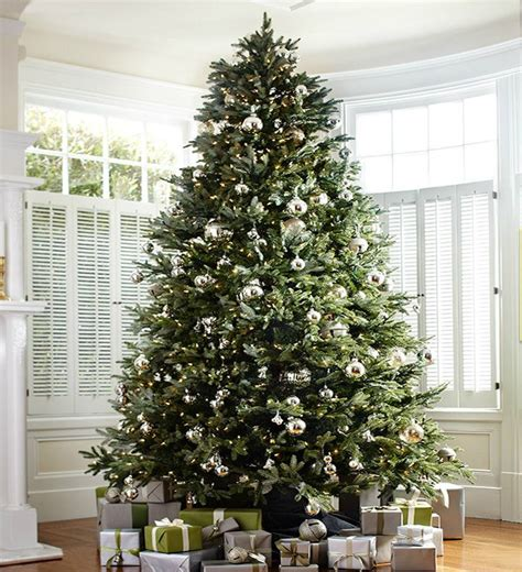 best price real christmas trees in plymouth caring for a fresh cut tree ridgeview