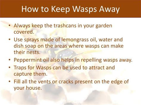 how to keep wasps away from house ppt why to hire wasp pest control services powerpoint