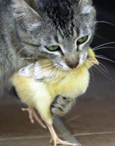 regarder oscar et le monde des chats regarder streaming vf en france photos animaux