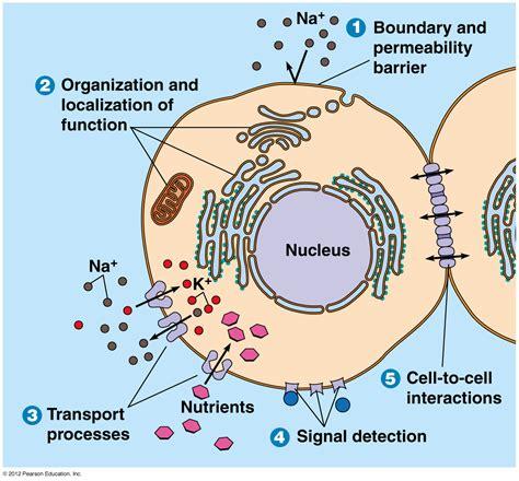 biol cell biology