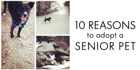8 Reasons To Adopt A Pet Rather Than Buy by Sweet Senior Pets With Nutrish 187 Makes