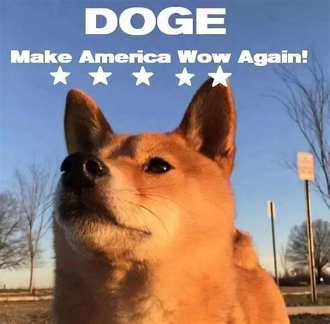 Doge Wow doge wow intensifies www imgkid the image kid has it