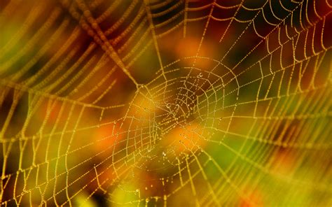 hd web 1080p 21 excellent hd spider web wallpapers hdwallsource