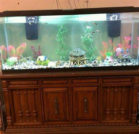 Stand Galon Aqua 25 best ideas about 55 gallon aquarium stand on