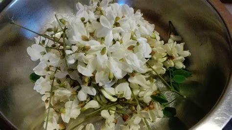frittelle con fiori d acacia frittelle con i fiori d acacia le ricette di patty