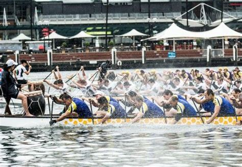 dragon boat racing chinese new year pin by cremorne point manor on sydney chinese new year