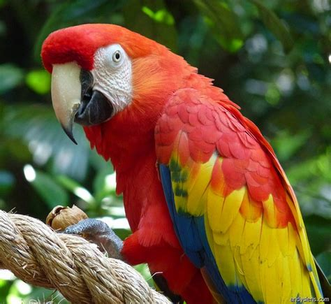 the not so complete birds afoul of america books costarica parrot 6 facts about macaws biological