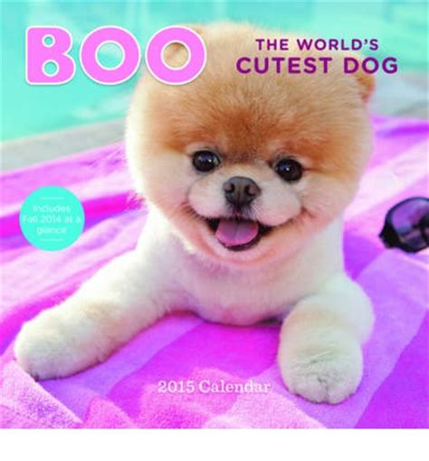 rot the cutest in the world books 2015 wall calendar boo the world s cutest j h