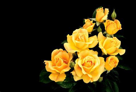 beautiful flower wallpaper images