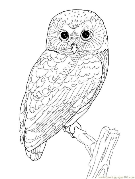 printable snowy owl coloring pages best 25 owl coloring pages ideas on pinterest free