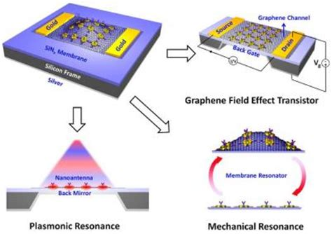 graphene capacitor sensor graphene based multi modal bio sensor graphene info