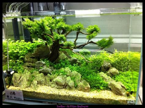 aquascaping tips aquascaping tips 28 images aquascaping techniques 28