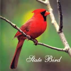 state bird of north carolina nc state bird north carolina state bird nc places