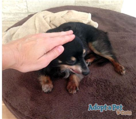 do dogs like to be petted do dogs like to be pat on the with 187 adoptapet