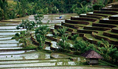 tegalalang rice fields  bali bali tegalalang rice