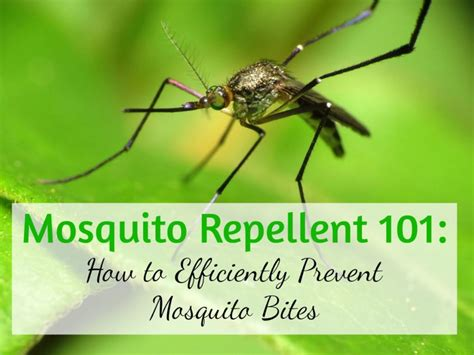 the best guide to mosquito repellent operation disclosure