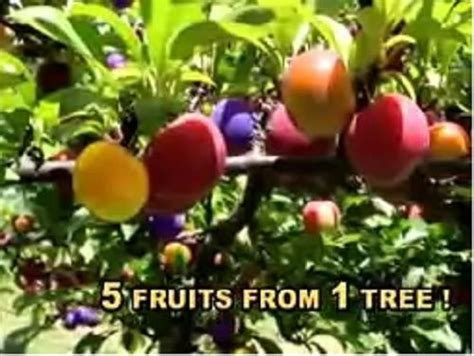 salad fruit tree 25 best ideas about fruit salad tree on fruit