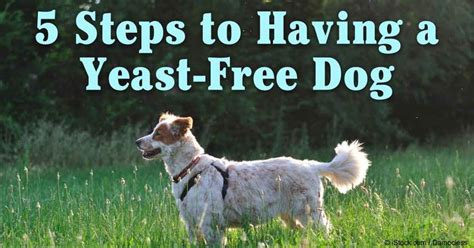 how to cure yeast infection in dogs best 20 itching ideas on itchy remedies skin itching and