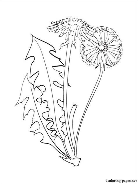 dandelion coloring page coloring pages